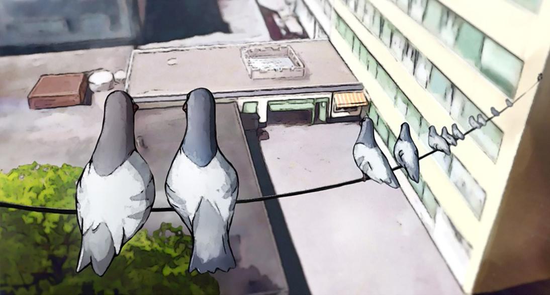 pigeonsa14